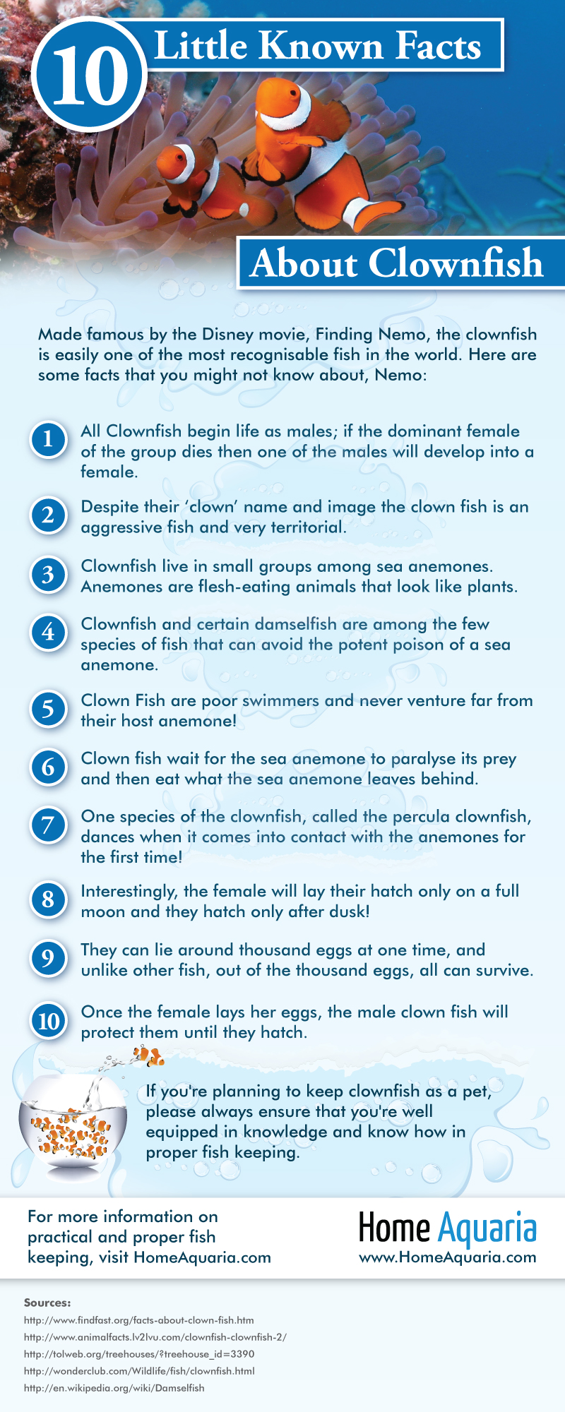 Infographic - 10-little-known-facts-about-clownfish