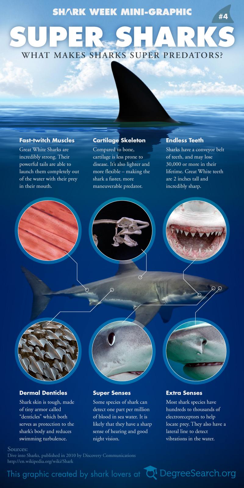 Infographic - super-sharks--what-makes-sharks-super-predators
