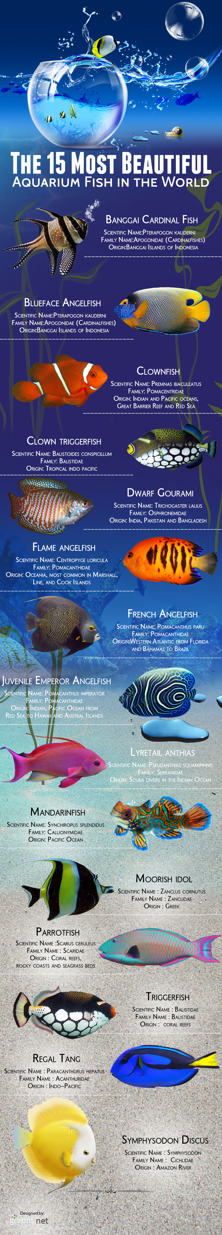 Infographic - the-15-most-beautiful-aquarium-fish-in-the-world