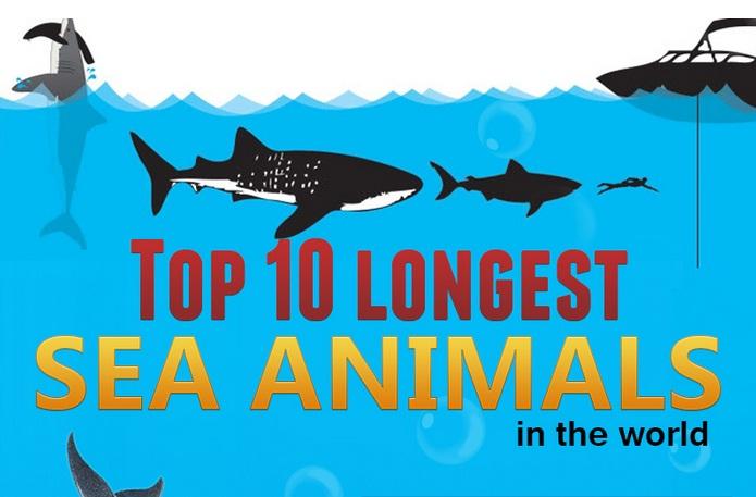 top 10 longest sea animals