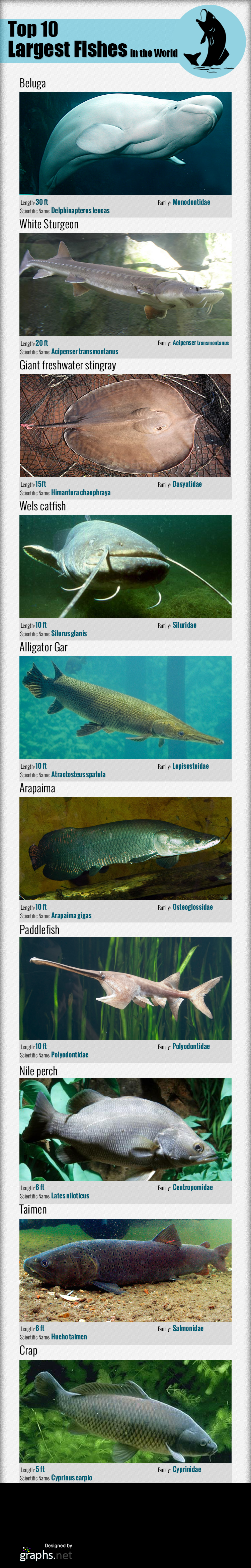 Top-10-Largest-fishes-